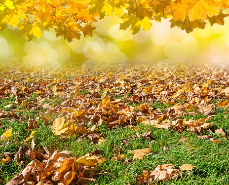 lawn covered with golden tree leaves by andreusK/stock.adobe.com.