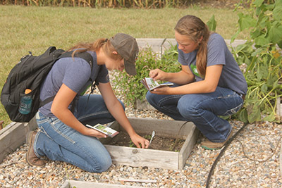 Students evaluating a crop plot for diseases and pests.