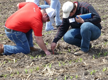 people kneeling in field scouting crops.