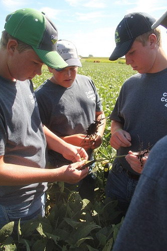three students scouting a soybean field.