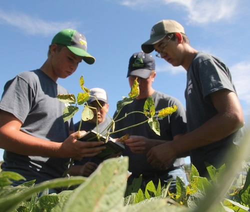 four crop scouts in soybean field.