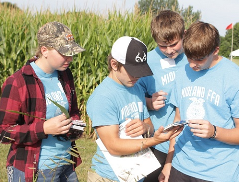 four students analyzing a plant.