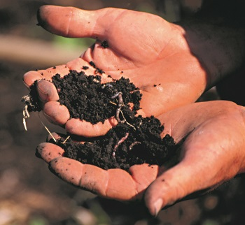 two hands holding soil.