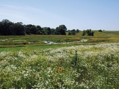 buffer strip, crops, stream and native plants.