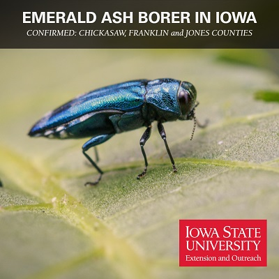 emerald ash borer confirmed in Chickasaw, Franklin and Jones counties.
