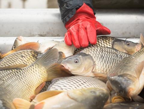 fisherman at work/fishing industry by zorandim75/stock.adobe.com.