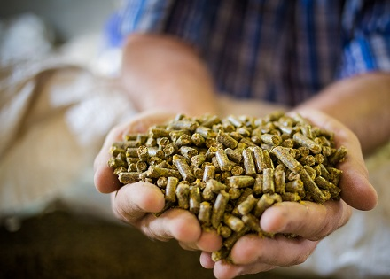Dewald/stock.adobe hands holding animal feed pellets.