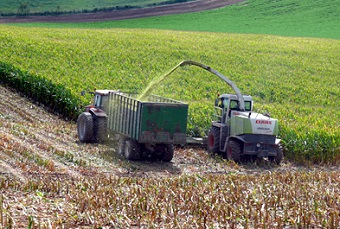 silage production.