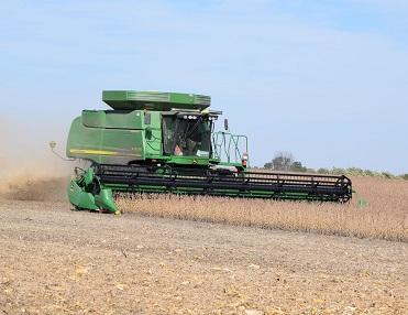 harvesting soybean.
