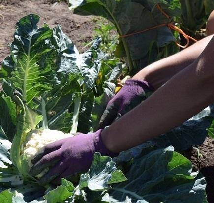 specialty crops.