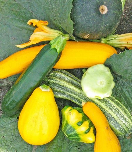 Summer Squash Is A Versatile Vegetable In Iowa Gardens News