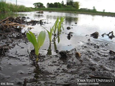 wet field conditions photo by m boyer.