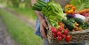 person holding fresh vegetables in a basket by HQUALITY/stock.adobe.com.