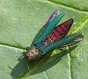 Emerald Ash Borer Warming Up in the Sunlight by moneycue_canada/stock.adobe.com.
