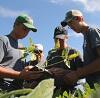 four crop scouts in soybean field.