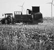 dry manure spreader in field.