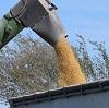 dumping grain into truck.