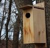 birdhouse on tree.
