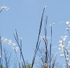 Little Bluestem Grass by L.A. Faille/stock.adobe.com.