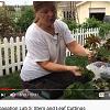 Master Gardener training.