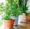 office plants indoors.