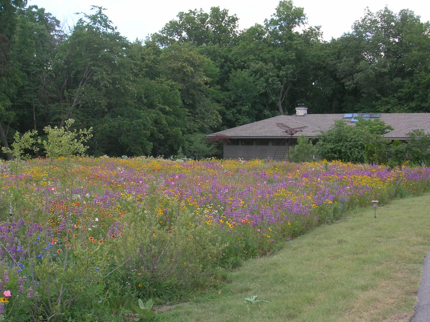 marvelous growing wildflowers in backyard part 10 image of