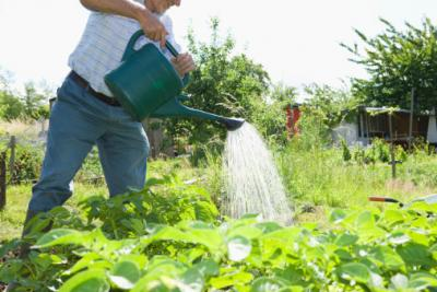 Yard And Garden Properly Watering Your Garden News