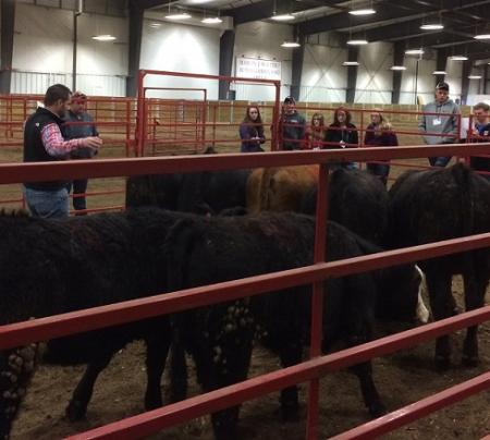 adult instructor in cattle show ring and students around outside of ring.
