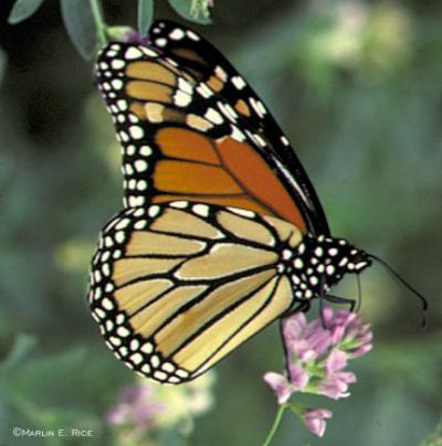 Componentes básicos y plantas para un jardín de mariposas