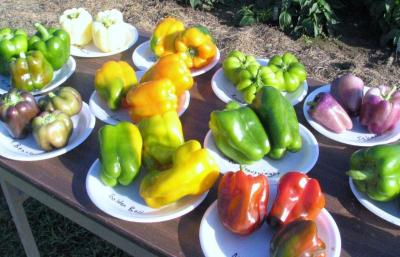 Sampling of Peppers