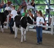 4-H Dairy Project