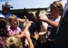4-H'ers with horse