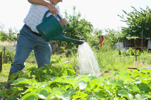 Yard and garden properly watering your garden iowa for Watering vegetable garden