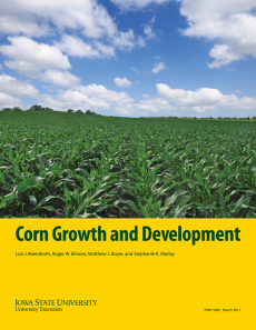 Corn Growth and Development