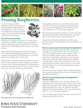 Pruning raspberries