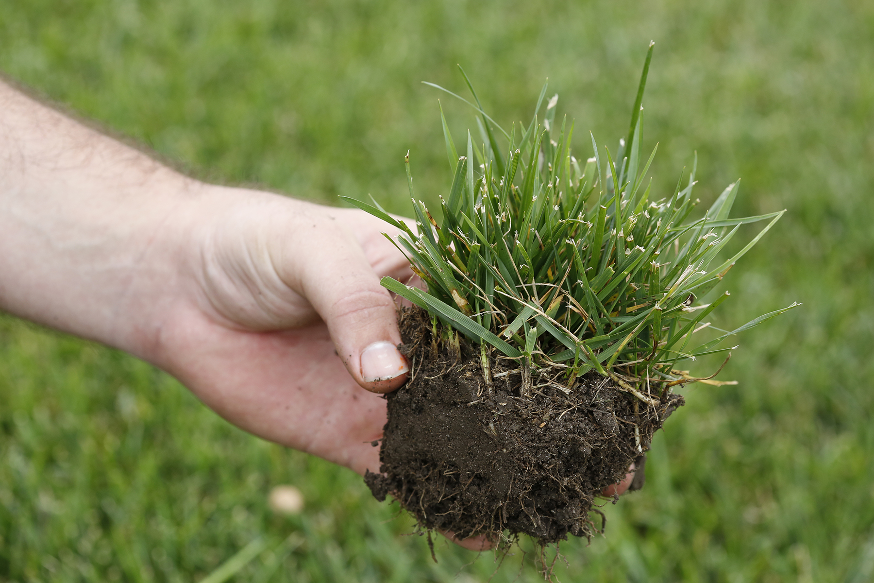 Turfgrass Research Is Highlight of July 23 Field Day near Ames ...