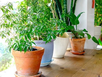 houseplants on a table