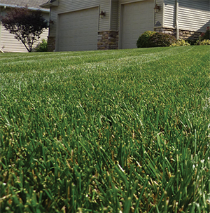 Summer is a great time of year, but only if you properly maintain your lawn.