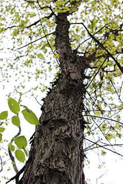 bat bark habitat