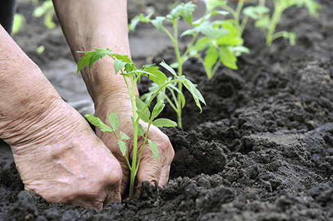 Planning a Spring Garden on Your Acreage – Spring Garden Planning