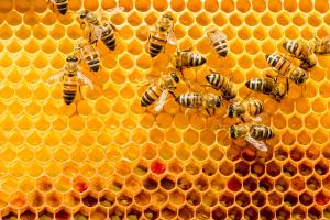 Managing Varroa Mites in Honey Bee Colonies | Small Farm