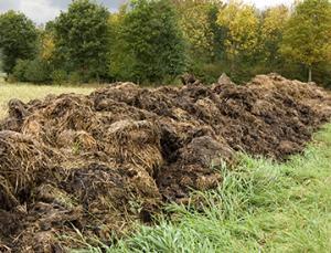 manure pile