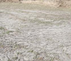 Pasture silt layer