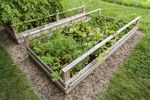 What Are Raised Beds