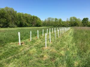 tree plantings