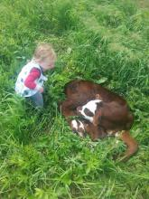 Caite's daughter and a calf