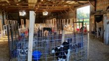 retrofitted cattle barn