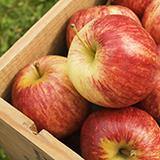 photo of a picked box of apples