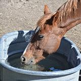 horse waterer