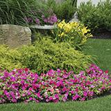 photo of a small, colorful flower bed